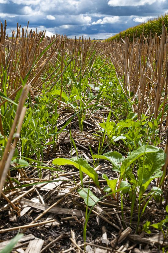 How Soil Health Practices Boost The Bottom Line Successful Farming
